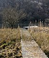 Boardwalk at Woodend Loch - geograph.org.uk - 1212752.jpg