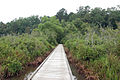 Boardwalk in Tombigbee NF.jpg