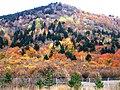 Bolu-Yeniçağa Arası Otoyolda Sonbahar - panoramio.jpg