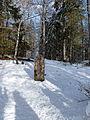 Borne frontière franco-suisse 186 entre Chapelle des Bois(FR) et Le Brassus (CH).JPG