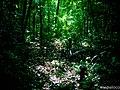 Bosque en la Finca Susun, área de 2,400 Mzs. - panoramio.jpg