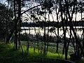 Bosque laguna torca.jpg