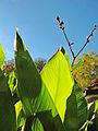 Botanička bašta Jevremovac, Beograd - jesenje boje, svetlost i senke 18.jpg