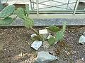 BotanicGardensPisa (110).JPG
