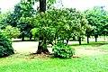 Botanic garden limbe41.jpg
