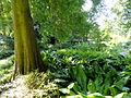 Botanischer Garten, Frankfurt am Main - DSC02531.JPG
