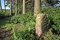 Boundary Stone - geograph.org.uk - 879740.jpg