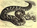 Brehms Tierleben - allgemeine Kunde des Tierreichs - mit 1800 Abbildungen im Text, 9 Karten und 180 Tafeln in Farbendruck und Holzschnitt (1892) (20226733420).jpg