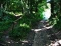 Bridleway to Ashford Hanger - geograph.org.uk - 955565.jpg