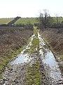 Bridleway to East Leake - geograph.org.uk - 748130.jpg