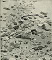 British birds' nests; how, where, and when to find and identify them (1898) (14769454093).jpg