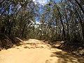 Brooman NSW 2538, Australia - panoramio (105).jpg