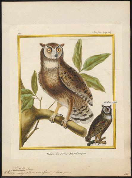 File:Bubo magellanicus - 1700-1880 - Print - Iconographia Zoologica - Special Collections University of Amsterdam - UBA01 IZ18400091.tif