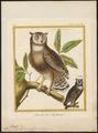 Bubo magellanicus - 1700-1880 - Print - Iconographia Zoologica - Special Collections University of Amsterdam - UBA01 IZ18400091.tif