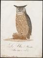 Bubo maximus - 1800-1812 - Print - Iconographia Zoologica - Special Collections University of Amsterdam - UBA01 IZ18400067.tif