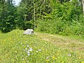 Buchenwald - Ehemalige Bahnlinie (Former Railway Trackbed) - geo.hlipp.de - 40199.jpg