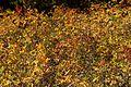 Buckhorn Rd-Little Beaver Creek Tr 9-26 (21612536448).jpg