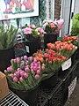Bunga Tulip di St. Lawrence Market.jpg