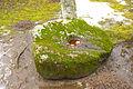 Burbiskio dubenuotas akmuo.jpg