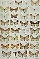Butterflies and moths of Newfoundland and Labrador - the macrolepidoptera (1980) (20323045950).jpg