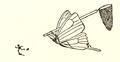 ButterflyCatcher.png