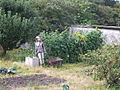Bwgan brain - scarecrow, Penmaenmawr 03.JPG