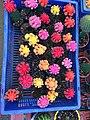 Cactus small flower.jpg
