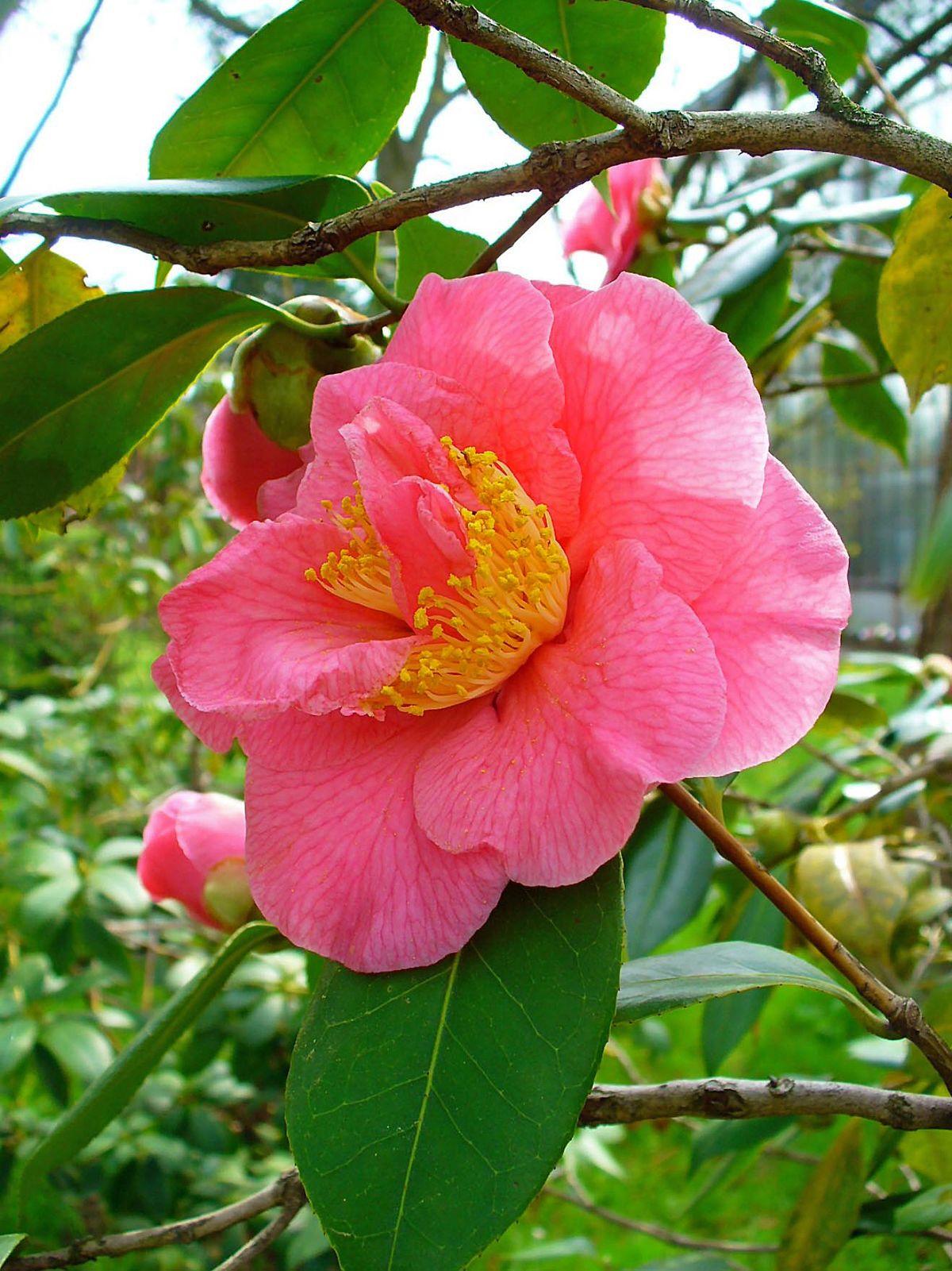 Botanischer Garten Der Universit 228 T Karlsruhe Wikidata