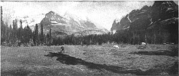 Camp Contentment Meadow, above Lake O'Hara, at foot of Mount Schaeffer.jpg