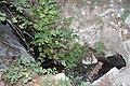 Canal de Bellús a Xátiva a l´entorn de la Cova Petxina.jpg