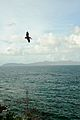 Caneel Bay Turtle Point Trail Pelican Watching 4.jpg