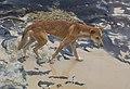 Canis lupus dingo, Fraser Island.jpg