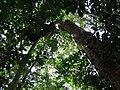 Capinarana - panoramio (1).jpg