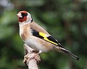 en perched fugl