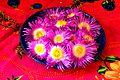 Carpobrotus acinaciformis (sour fig, vygie) flowers.JPG