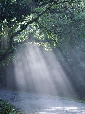 Yacambú National Park - Image: Carretera vía el blanquito, parque nacional yacambu. estado lara