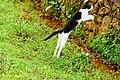 Cat jump.jpg