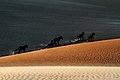 Cavalos selvagens nas Dunas de São Cristóvão.jpg
