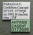 Cephalotes pellans casent0173696 label 1.jpg