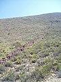 Cerca Empedrada Cercano al ejido la Noria de las animas, Paredon Coahuila - panoramio.jpg