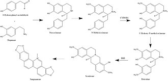 Sanguinarine - Image: Chemistry of Poisons Project Pic