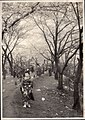 Cherry Blossom Time in Japan (1914 by Elstner Hilton).jpg