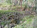 Chinese Diggings tailings pile 3 - Jacksonville Oregon.jpg