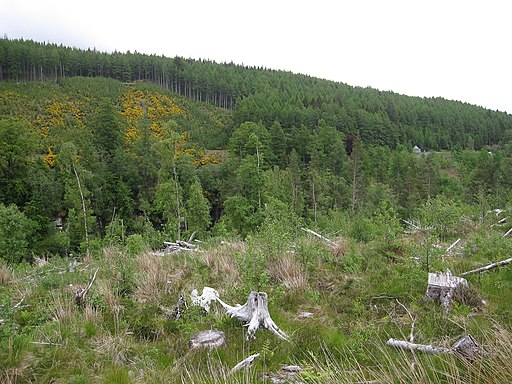 Cleared area by Corrieshalloch Gorge - geograph.org.uk - 2144915