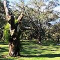 Clearwater,Florida,USA. - panoramio (60).jpg