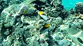 Coast Rd, Qesm Sharm Ash Sheikh, South Sinai Governorate, Egypt - panoramio (4).jpg