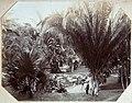 Collectie Nationaal Museum van Wereldculturen TM-60062307 Fotograaf aan het werk in Castletown Gardens Jamaica A. Duperly & Sons (Fotostudio).jpg