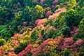 Colors of Thai Forest.jpg