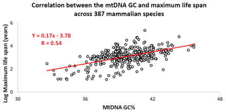 Animal species mtDNA base composition was retrieved from the MitoAge database and compared to their maximum life span from AnAge database. Correlation between the mtDNA GC%25 and maximum life span across 387 different mammalian species.png