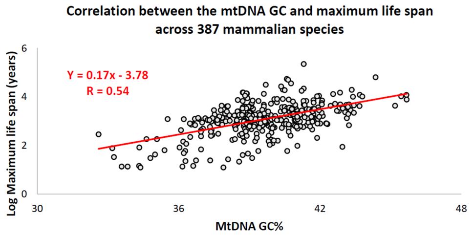 Correlation between the mtDNA GC% and maximum life span across 387 different mammalian species